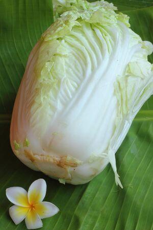 nbsp: Lettuce  Stock Photo