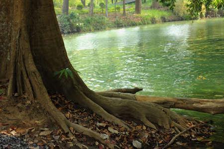 Green tree on the lake