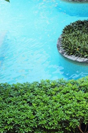 greenpeace: Green plants to ponds