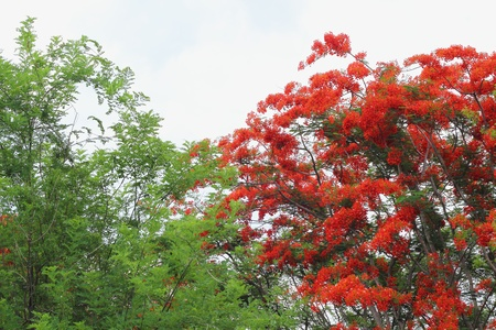 Green tree with red flowers. photo