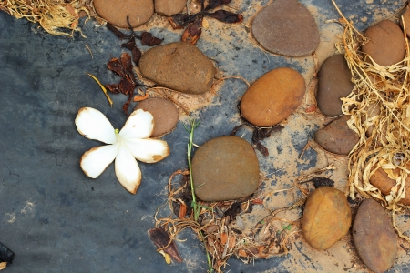 White flowers with stones.