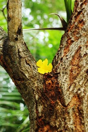 yellow flower on a three photo