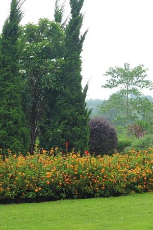 English garden. Stock Photo - 21473987