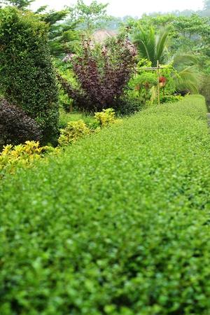 English garden. Stock Photo - 21474005