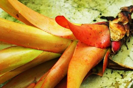 neoregelia: Ananas comosus