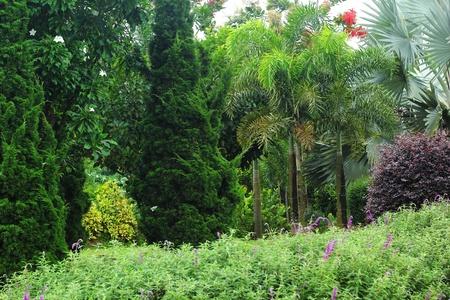 English garden Stock Photo - 21474091