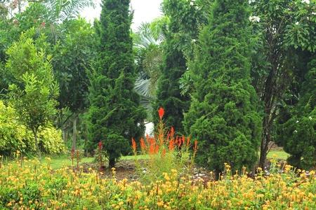 English garden. Stock Photo - 21474097