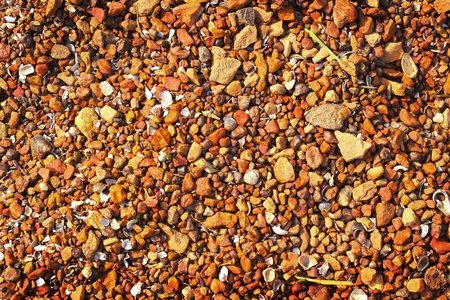 Brown stone background with shells. photo