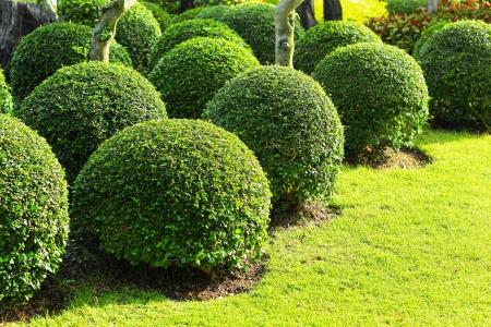 English garden Stock Photo - 21871354