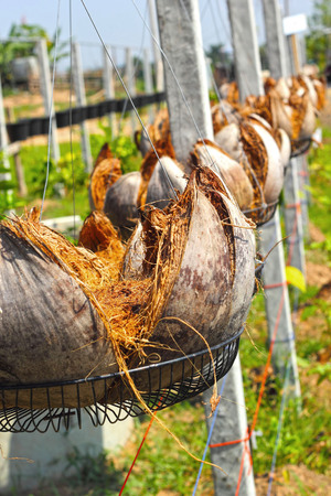 invents: Coir pots hanging in a row.