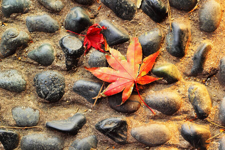 Red maple leaves on a stone floor. photo