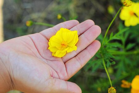 Yellow flower in the hands of children. photo