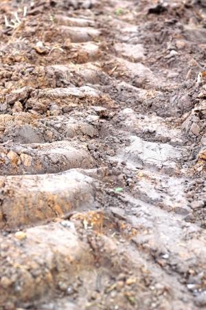 Wheel tracks on the soil. Stock Photo - 25001572