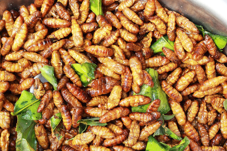 fried silk worms in the market photo