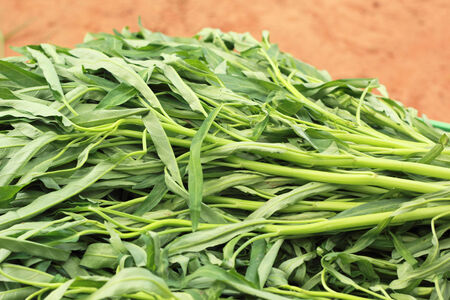 Water spinach in the market photo