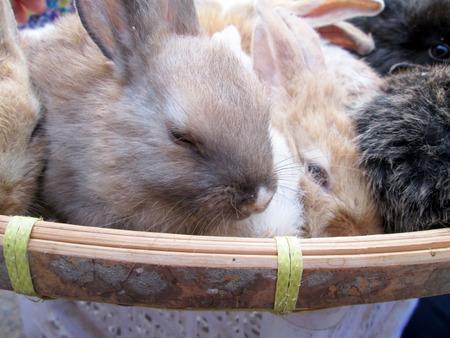 sold small: Coniglio piccolo lotto venduto al mercato.