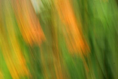 background beauty: blurred light flowers - background beauty