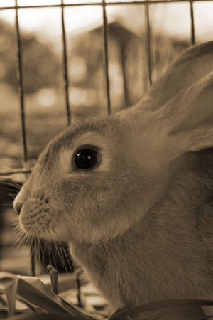 rabbit cage: Coniglio in una gabbia. Archivio Fotografico