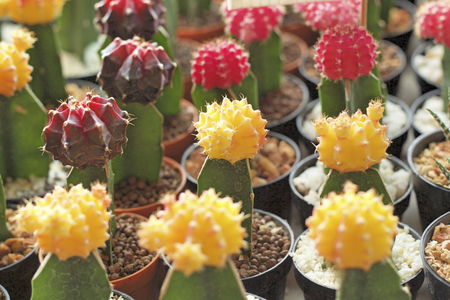 frilled: Close up of the cactus