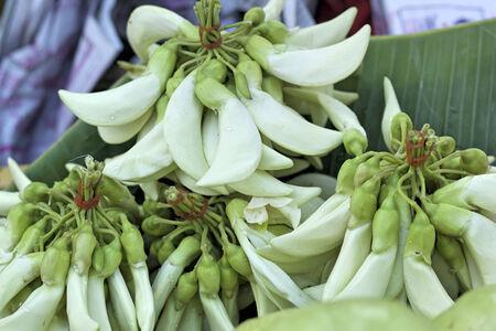 Agasta fresh white at the market photo