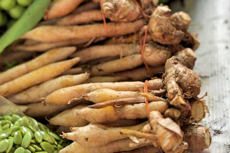 ginseng roots: Fresh kaempfer in the market