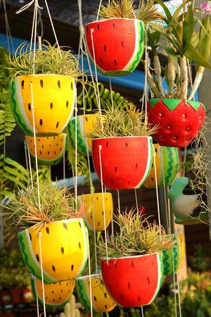 pineapple tree: pineapple tree in the pot