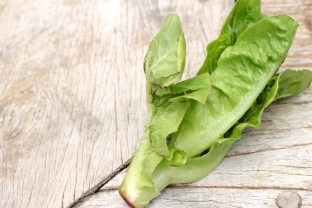 cos: Cos Lettuce, green on wood background