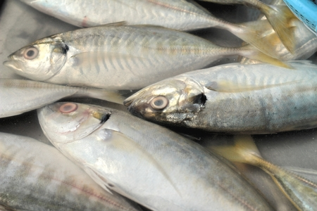 fishy: Fresh fish in the market