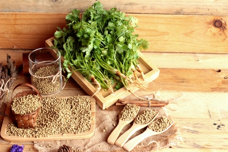 cilantro: Dry coriander seeds and fresh coriander green