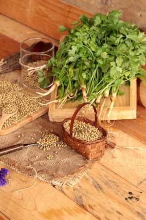 culantro: Semillas de cilantro seco y verde de cilantro fresco
