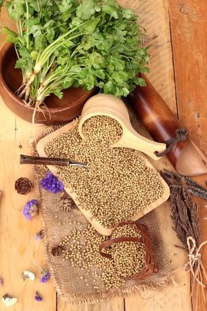 coriander seeds: Dry coriander seeds and fresh coriander green