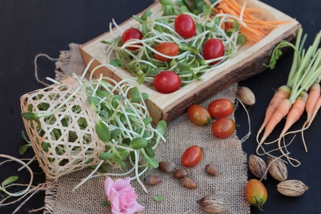 germinate: Green young sunflower seedling and tomatoes salad Stock Photo