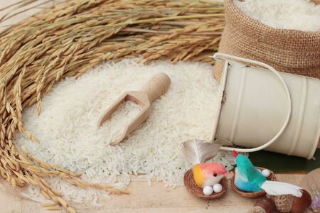 Jasmine rice and rice grains for the harvest Stock Photo