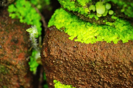 textured wall: Green moss on rock floor with nature Stock Photo