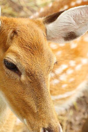Deer in zoo
