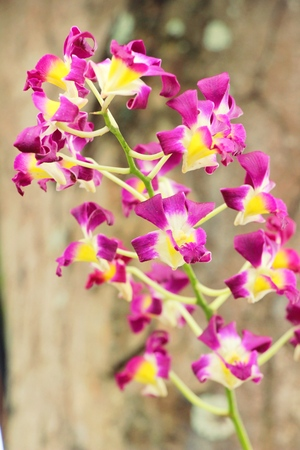 Orchid flower at beautiful in the nature
