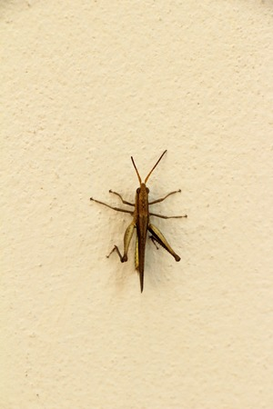 Grasshopper on the wall