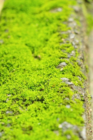 Green moss on rock floor with nature Stock Photo