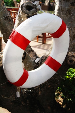 Ring buoy hang on tree with pool