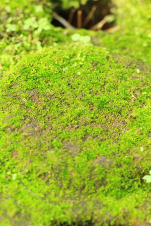 Green moss on rock floor with nature 写真素材