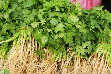 Fresh coriander for cooking in the market Stock Photo