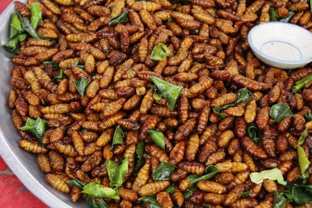 Fried silk worms delicious in street food