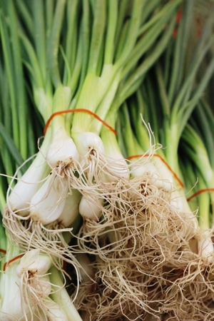Fresh spring onion in the market