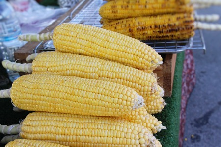 Fresh corn for cooking in the market