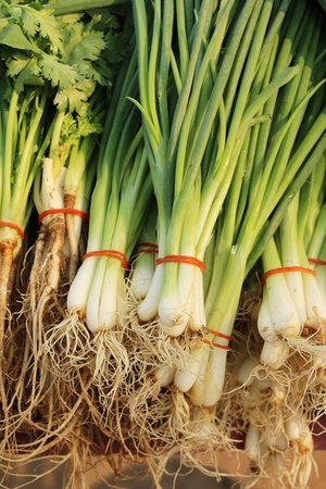 Fresh spring onion for cooking in market