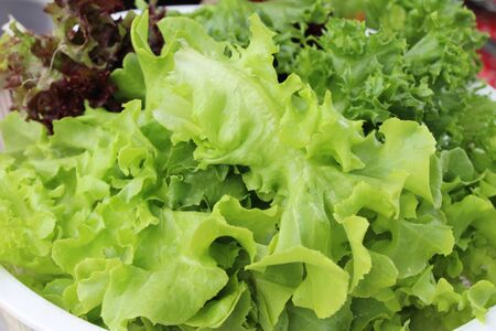 Fresh lettuce for cooking at street food 版權商用圖片