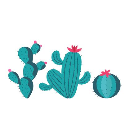 Illustration shows collection cactus, succulent, green, houseplant, Isolated on white, design, flat style vector illustration.