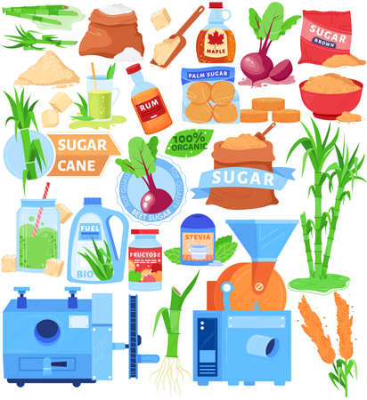 Cane sugar product substitutes vector illustration set, cartoon flat agriculture collection of sugarcane, beet and sugary food ingredient