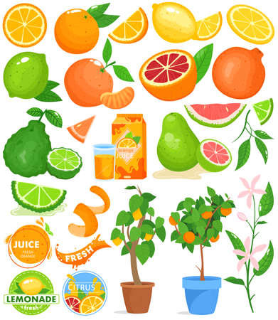 Citrus fruit vector illustration set, cartoon flat food drink citrus collection with fresh orange juice, citric plant in pot Illustration