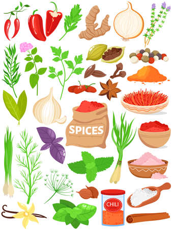 Spices herbs vector illustration set, cartoon flat herbal spices for cooking food collection with red hot chili, parsley, basil